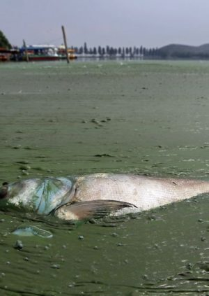Pollution Damaging Nature in the Waterways of China