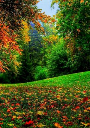 Sustainable and Natural Green Grass Covered in Fall Leaves