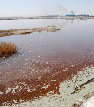 The Shoreline of a Polluted Body of Water in Canada